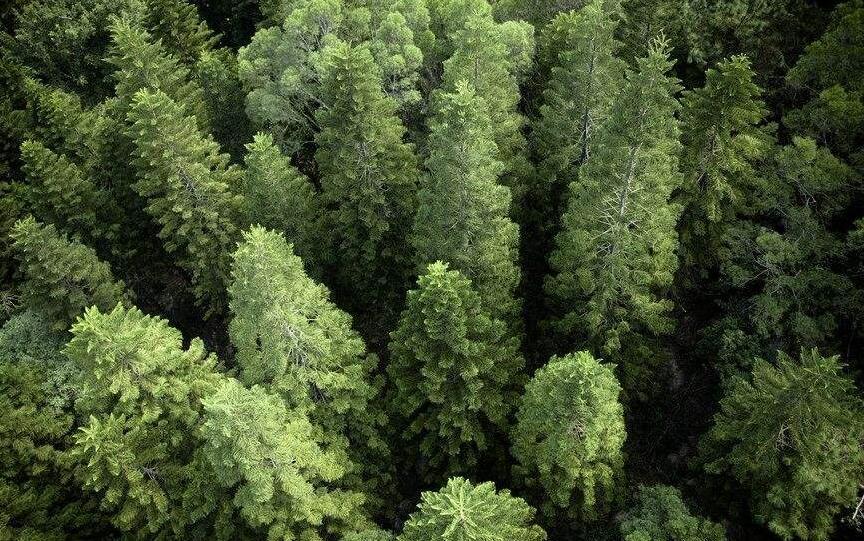 久盛地板有限公司关于负责任的林产品采购政策